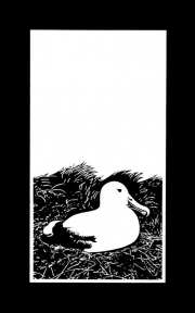 """18 - Nesting Albatross - Limited Edition Print of 100. Image Size: 8"""" W x 12.5"""" H 
