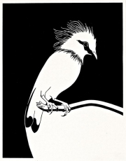 """19 - Male Bali Myna - Limited Edition Print of 100. Image Size: 10.5"""" H x 8"""" W 