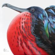 "8 - Christmas Island Frigate - Giclée Print on Canvas: 8"" H x 8"" W | $165 US"