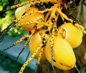 11 - Coconuts
