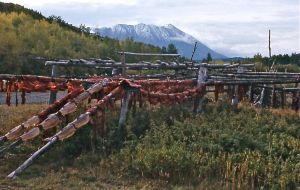 21 - First Nations Salmon Drying Near White Horse, Yukon